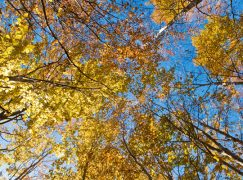 La stagione più colorata per un fotografo? L'autunno