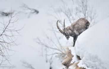 Trekking fotonaturalistico e corso di post-produzione nel Parco Nazionale Gran Paradiso