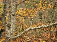 Ultimi giorni d'autunno in Val D'Aveto