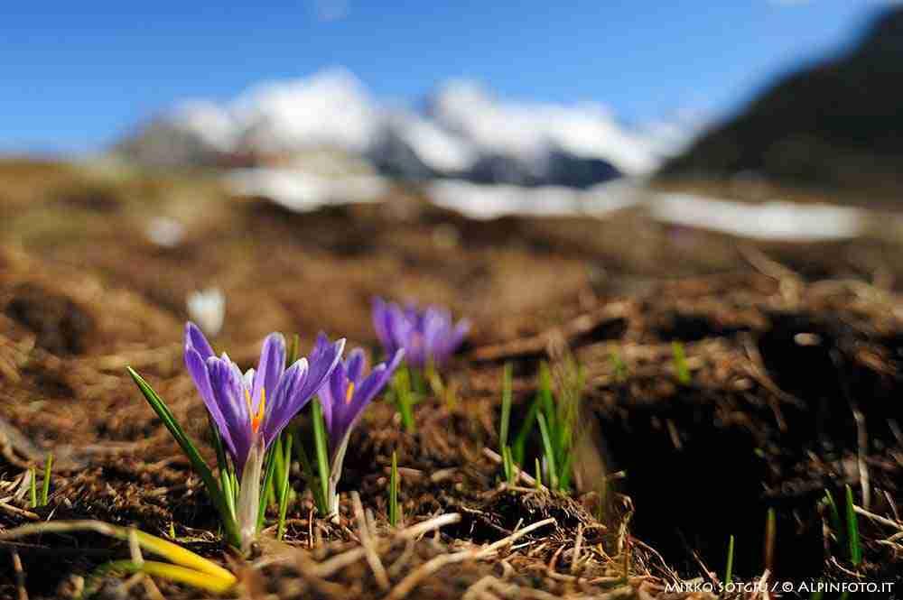 primavera_valtellina__web