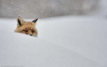 Esperienza foto-naturalistica | Inverno nel Parco Nazionale del Gran Paradiso
